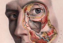 Detalle anatómico de un rostro