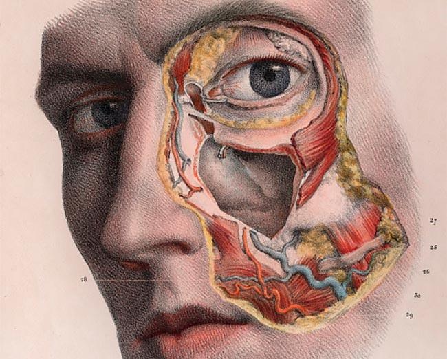 Atlas de anatomía humana y cirugía del siglo XIX - Cultura Bizarra